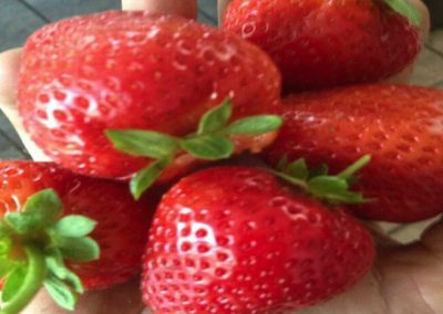 ormus_strawberry2